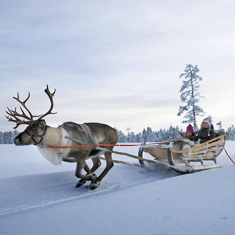 http://www.hulluporo.fi/wp-content/uploads/2015/02/reindeer-safari-800x800.jpg
